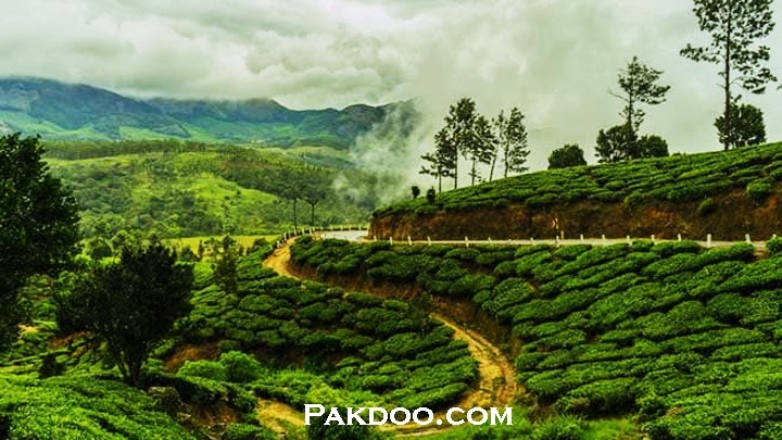 Biggest Tea plantation place Munnar in kerala