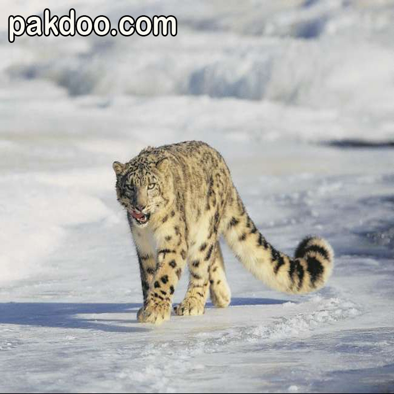 hemis-national-park-this-picture-is-made-for-pakdoo-hemis-national-park-situated-in-leh-ladakh.
